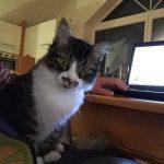 2_Katzenhilfe am PC_Susanne Hillmer